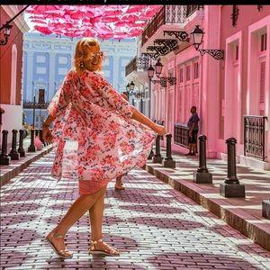 Stunning neon hot pink roses Shirley Unicorn 🦄